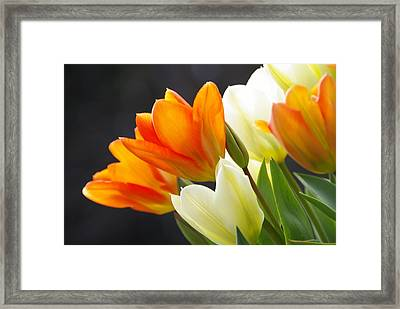 Framed Print featuring the photograph Tulips by Marilyn Wilson