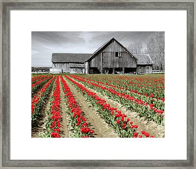Framed Print featuring the photograph Tulips by Matthew Ahola