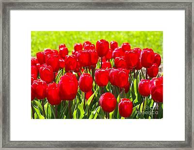 Tulips Framed Print by Nur Roy
