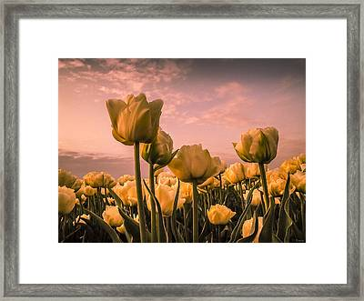 Tulips On A Pink Sky Framed Print