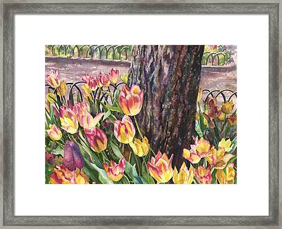 Tulips On The Mall Framed Print by Anne Gifford
