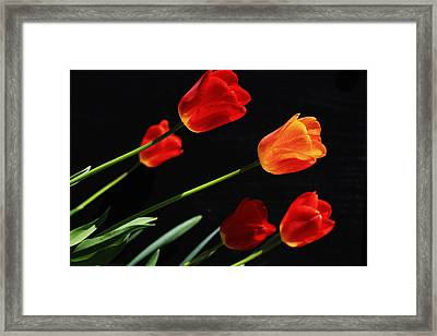Tulips Framed Print by Shelley Neff