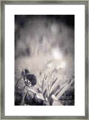 Tulips Framed Print by Silvia Ganora