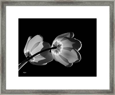 Tulips Tipping To The Sun Framed Print