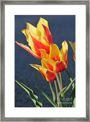 Framed Print featuring the photograph Tulips by Todd Blanchard