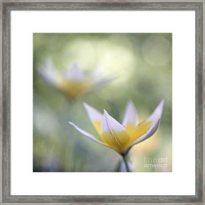 Tulips Framed Print by Uma Wirth