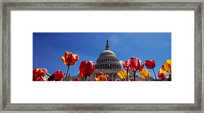 Tulips With A Government Building Framed Print