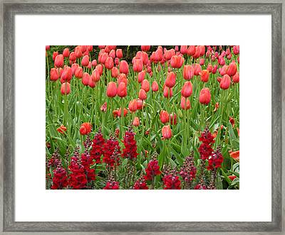 Framed Print featuring the photograph Tulips by Yue Wang