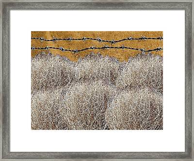 Tumbleweed And Barbed Wire Framed Print by Suzanne Powers