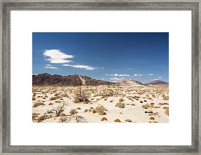 Tumbleweed Growing In The Mojave Desert Framed Print by Ashley Cooper
