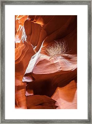Tumbleweed In Antelope Canyon Framed Print by Susan Schmitz