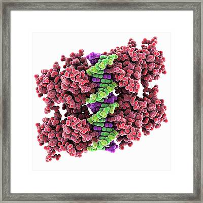 Tumour Suppressor Protein And Dna Framed Print