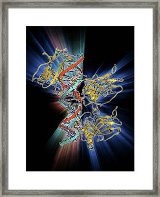 Tumour Suppressor Protein With Dna Framed Print by Laguna Design