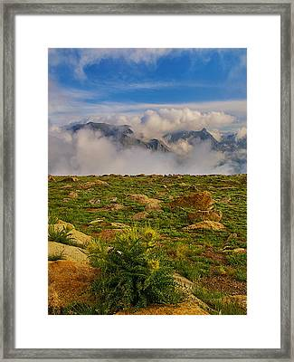 Tundra Delight Framed Print