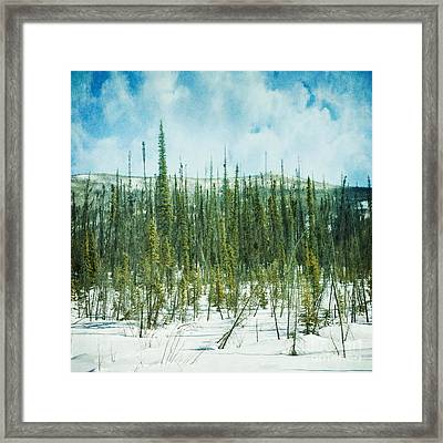 Tundra Forest Framed Print