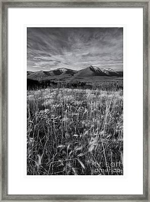 Tundra Summer Framed Print by Priska Wettstein