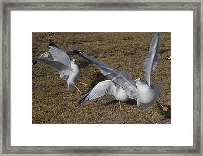 Tuned Framed Print by Betsy Knapp
