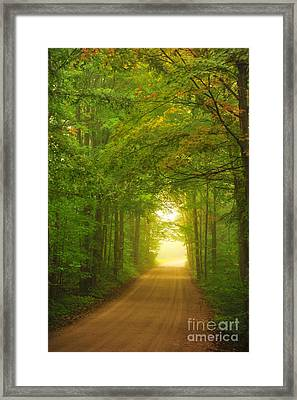 Tunnel In The Forest Framed Print by Terri Gostola