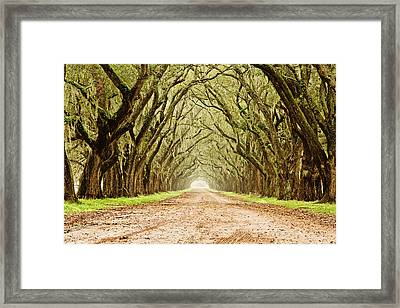 Tunnel In The Trees Framed Print by Scott Pellegrin
