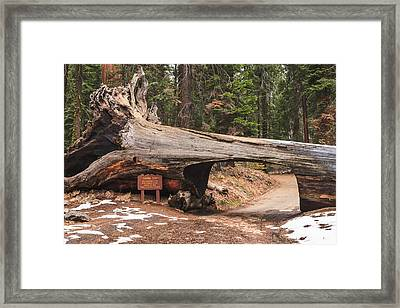 Tunnel Log Framed Print