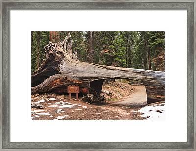 Tunnel Log Framed Print