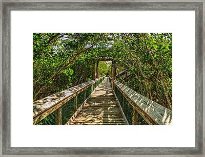 Tunnel Of Mangrove Green Framed Print