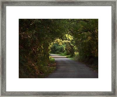 Tunnel Of Trees And Light Framed Print by Lanita Williams