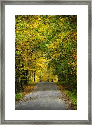 Tunnel Of Trees Rural Landscape Framed Print