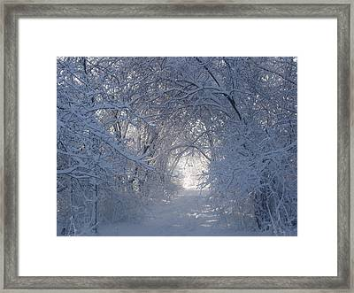 Tunnel Of Trees Framed Print by Teresa Schomig