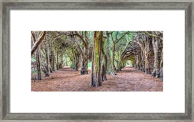 Tunnels Of The Intertwined Framed Print by Semmick Photo