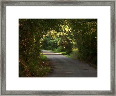 Tunnels Of Trees And Light II Framed Print by Lanita Williams