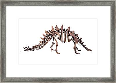 Tuojiangosaurus Skeleton Framed Print by Dorling Kindersley/uig