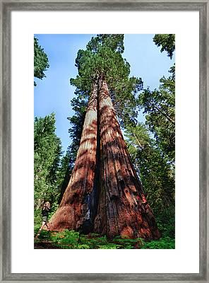 Tuolumne Grove, Yosemite National Park Framed Print