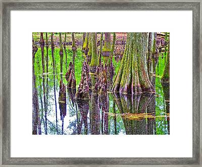 Tupelo/cypress Swamp Reflection At Mile 122 Of Natchez Trace Parkway-mississippi Framed Print by Ruth Hager