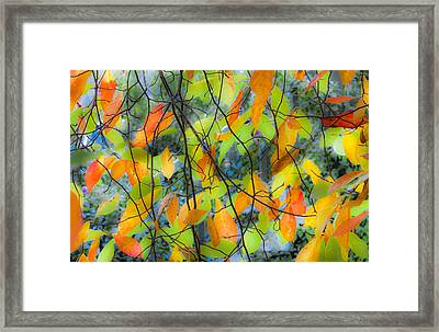 Tupelo Tapestry - Glowing Leaves Framed Print by Saxon Holt