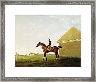 Turf Framed Print by George Stubbs