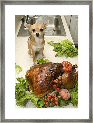 Turkey And Dog Framed Print