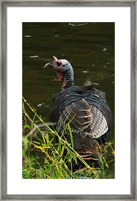 Turkey At Lake Framed Print
