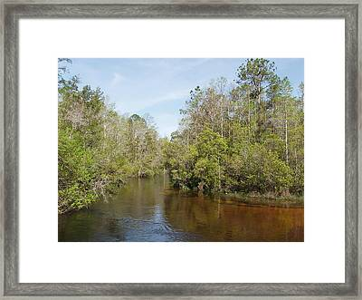 Framed Print featuring the photograph Turkey Creek Nature Trail In Niceville Florida by Teresa Schomig