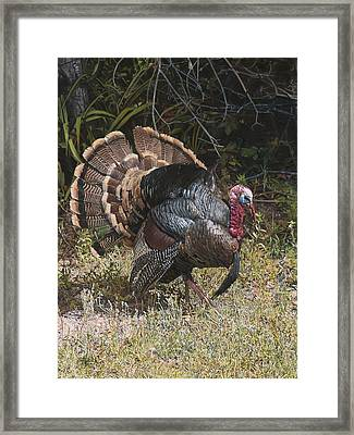 Turkey In The Weeds Framed Print by Joshua Martin