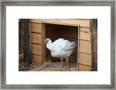 Turkey - Mt Vernon - 01131 Framed Print by DC Photographer