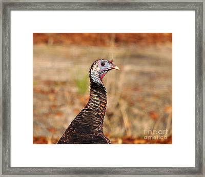 Turkey Profile Framed Print by Al Powell Photography USA