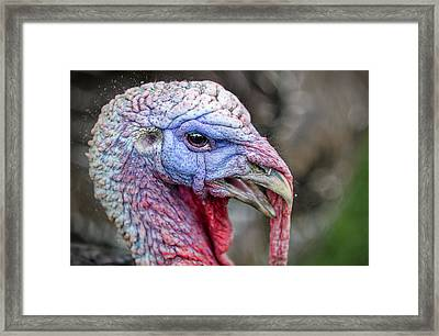 Turkey Framed Print