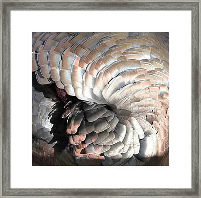 Framed Print featuring the photograph Turkey Siesta by Diane Alexander