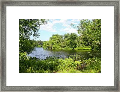 Turkey Swamp Park, Freehold, New Framed Print