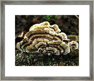 Framed Print featuring the photograph Turkey Tail Fungi by William Tanneberger