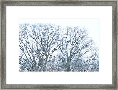 Framed Print featuring the photograph Turkey Tree by Dacia Doroff