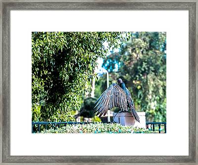 Turkey Vulture 1 Framed Print by Steve Knievel