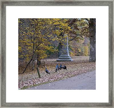 Turkeys Framed Print
