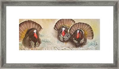 Turkeys Framed Print